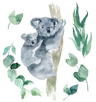 ユーカリの枝を持つコアラの水彩イラスト。オーストラリアのシンボルは、後ろに子がいるかわいいコアラです。コアラスケッチ手描き。
