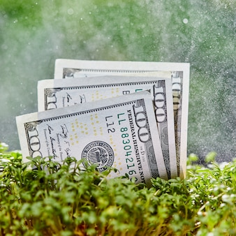 自然の緑の背景にアメリカのドル紙幣。