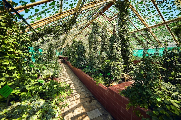 Теплица в ботаническом саду университета, вроцлав, польша. сад был построен на соборном острове (острув тумский)