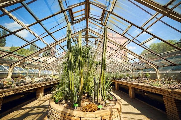 Теплица в ботаническом саду университета, вроцлав, польша.