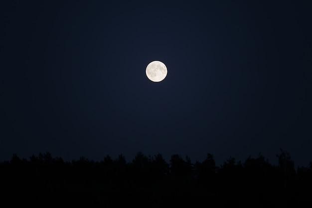 暗い夜空の森の上のスーパームーン