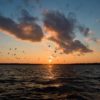 日の出、湖の森、オンタリオ州、カナダの湖を飛んで鳥のシルエット