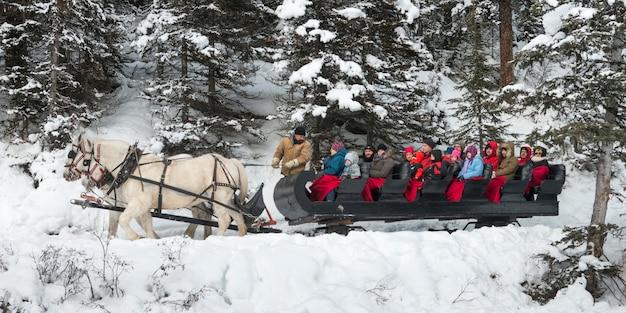 馬に描かれた旅行客、バンフ国立公園、アルバータ州、カナダ