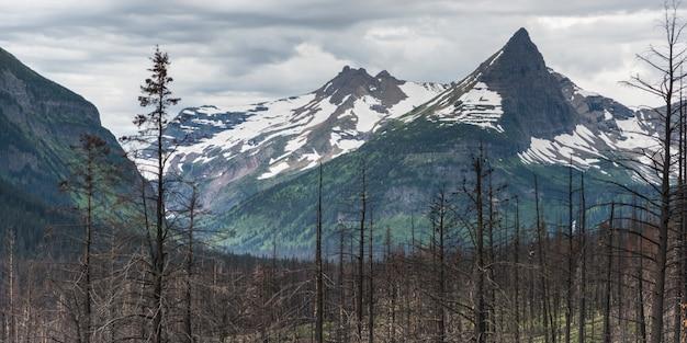 背景、氷河国立公園、氷河郡、モンタ、背景に雪解け山のある焼けた木