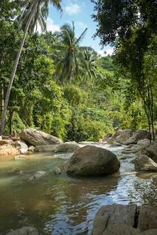 森林を流れる川、サムイ島、スラタニ県、タイ