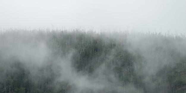 霧の中の木、ボンベイ、グロス・モーン国立公園、ニューファンドランドアンドラブラドール州、カナダ