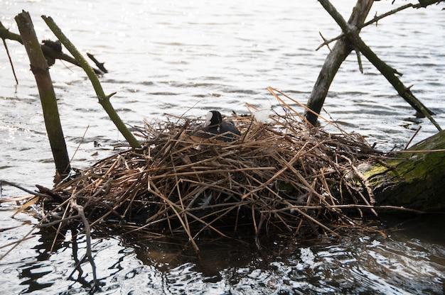 卵の鳥の湖のコットンの巣のログ