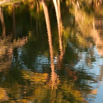 マウンテンパインリッジリザーブ、池の中の反射