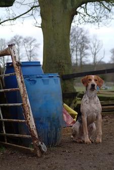 泥の中の犬。