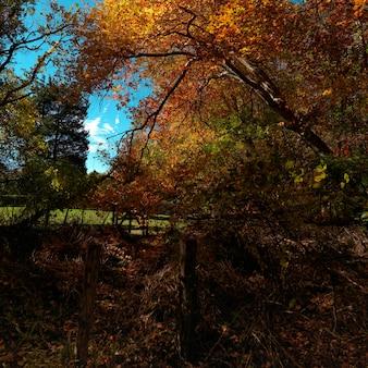 ハンプトンズの秋の木々