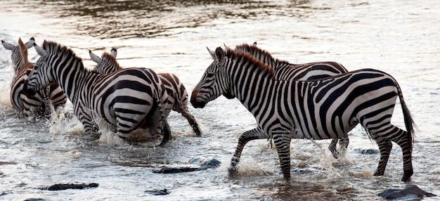 ケニアのゼブラ野生動物