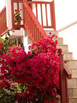 Красные цветы и оранжевый баннистер в миконосе