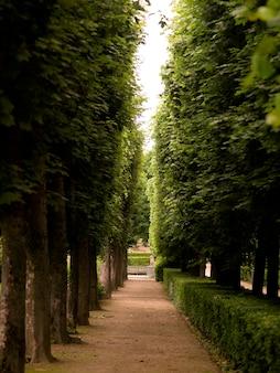 パリフランスの木々の間を歩く道