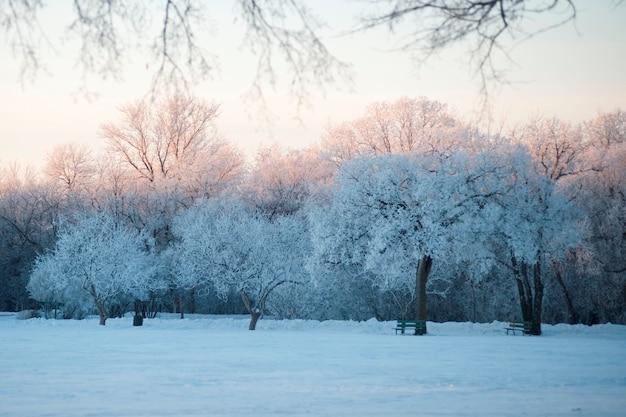 ウイニペグ、冬の霜