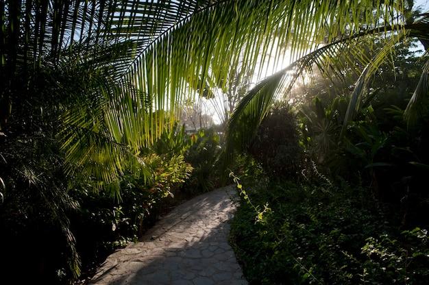 サンホセコスタリカの熱帯雨林を通る通路