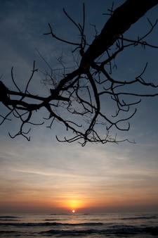 裸の木の枝が突出した海の上に輝くオレンジ色の夕日