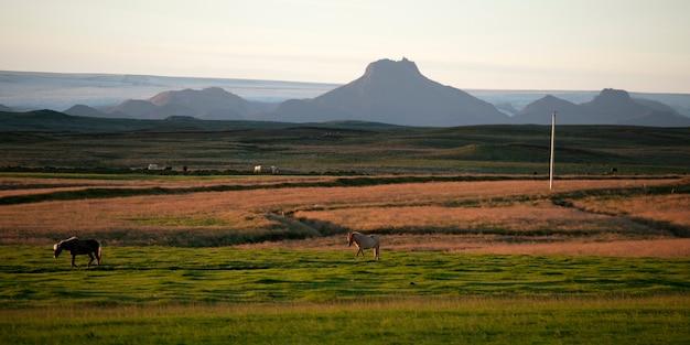 牧草地の風景アイスランド馬、遠くの山々