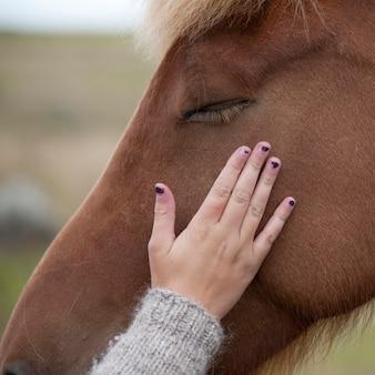 アイスランドの馬の顔を撫でる手