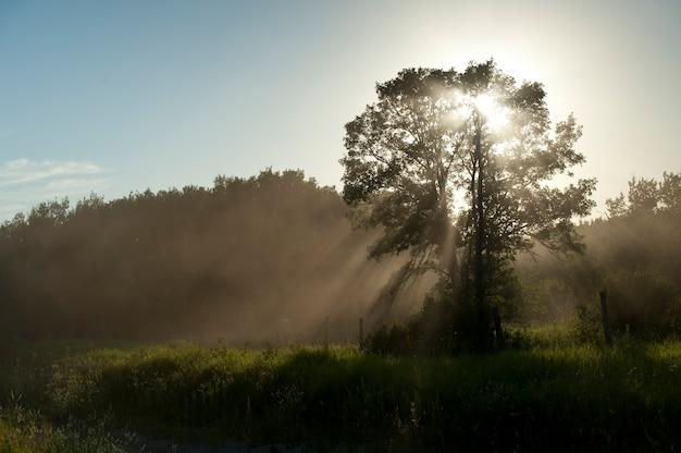 霧の中の日光の木、湖の森、オンタリオ