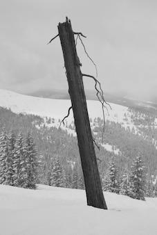 ヴェイル、コロラド州の丘の上の裸の木