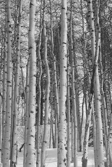 ヴェイル、コロラド州の冬の森