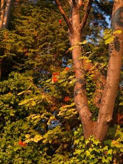 バンクーバー、ブリティッシュコロンビア州、カナダの木に閉じて