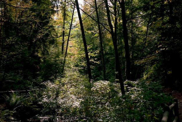バンクーバー、ブリティッシュコロンビア州、カナダのスタンリーパークの葉