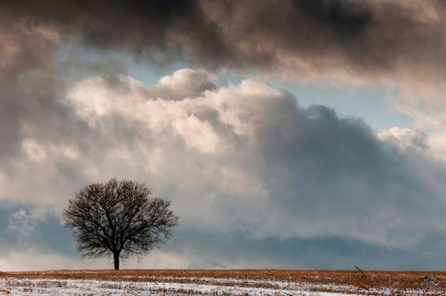 孤独な木がある冬の風景