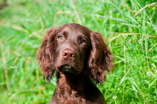 Крупный план собаки в поле