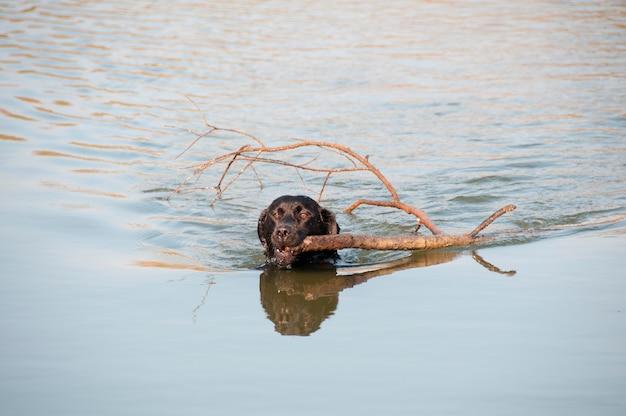 Собака, катающаяся на озере