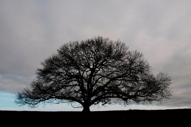 澄んだ空にぴったりの木の木