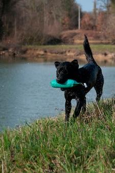 Собака, играющая на краю воды