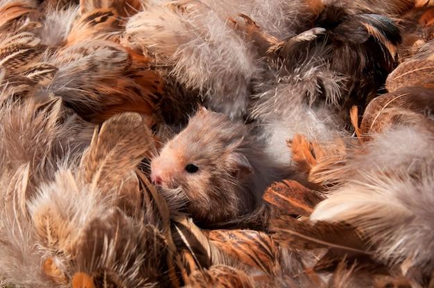 Хомяк в постели из перьев
