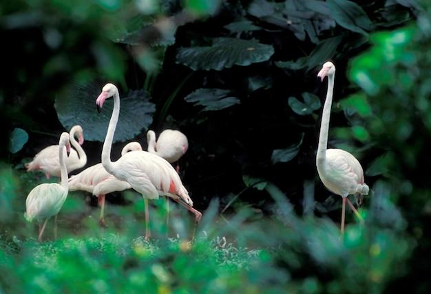 熱帯環境におけるフラミンゴ