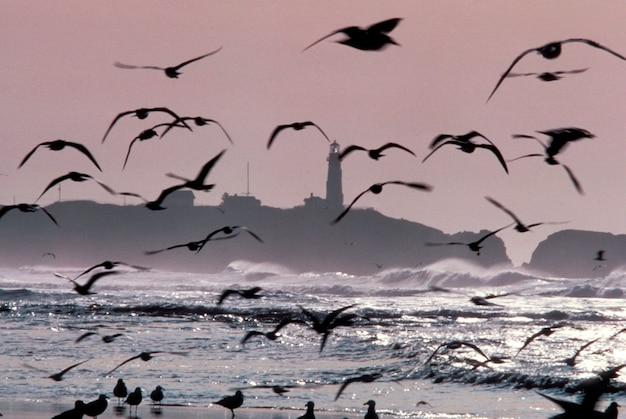 灯台と鳥、オレゴン州