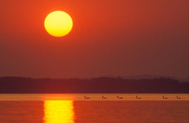 夕日の湖の鳥、バイエルン、