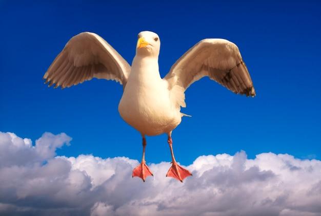 羽ばたき羽ばたきと雲の上を飛行する飛行