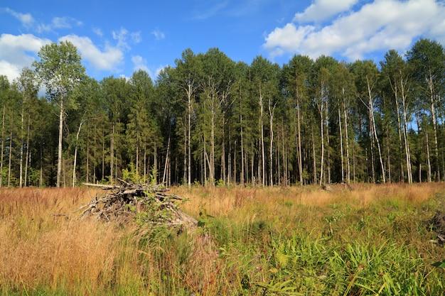 Лес рядом с полем