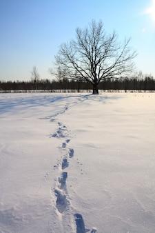 冬の畑にオーク