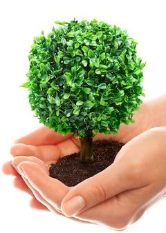 人間の手は若い木を保持し、保持します