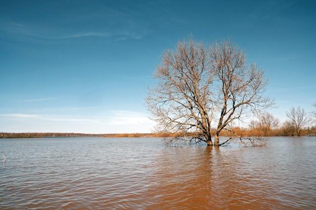 春の洪水の中で大きなオーク