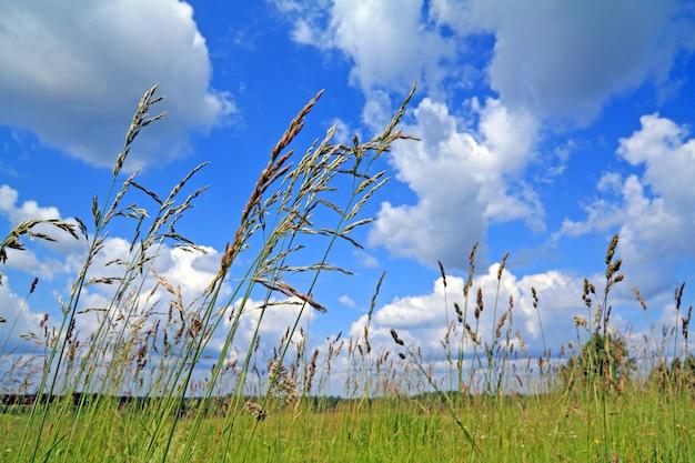 緑の野原にハーブを乾燥します。