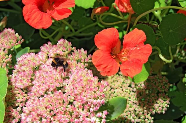 Маленький шершень на осенних цветах