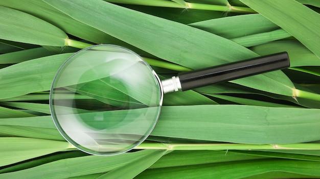 杖の葉の上の虫眼鏡