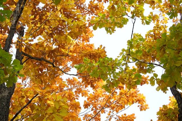 Красивое время осени, желтые и красные листья на деревьях.