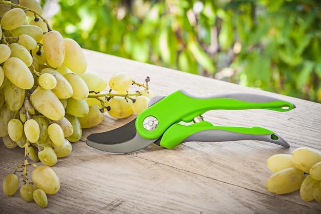 Садовый секатор и зеленый виноград на столе