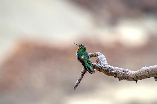 枝にハチドリ