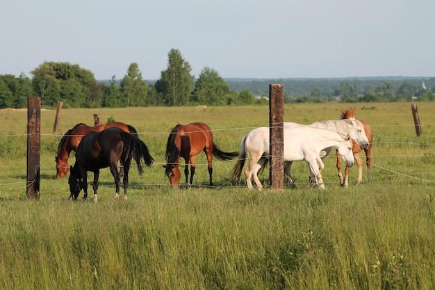 並んで立っている牧草地の牧草地で囲いの上の馬のグループ