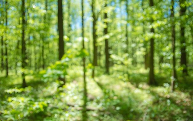 焦点が合っていない春の森の背景