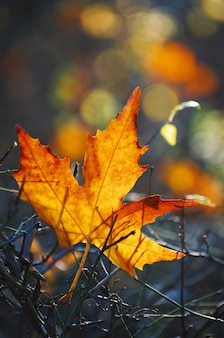 Желтый кленовый лист на земле в осеннем солнечном свете